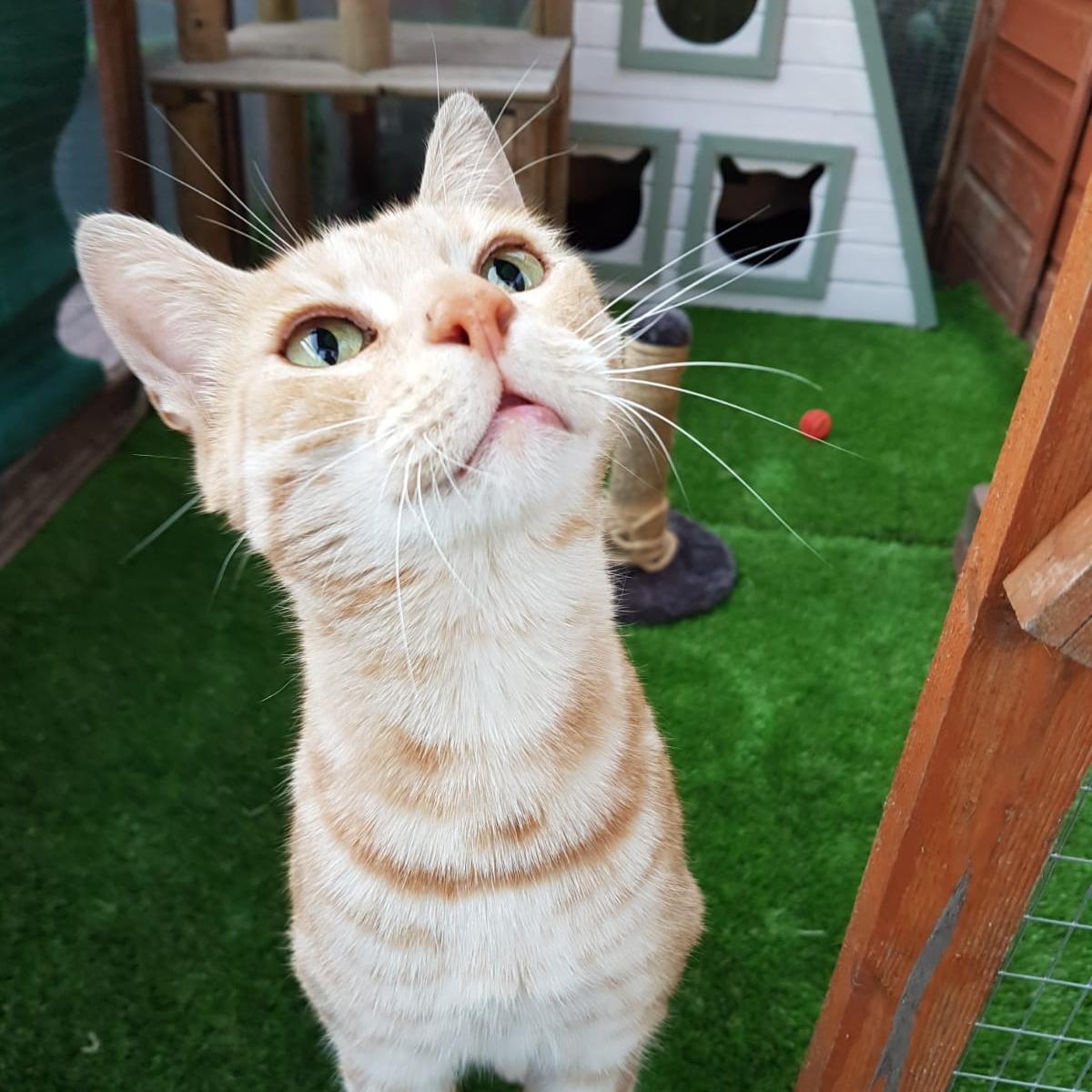 Tyga - Adopted Aug 18