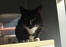 Sonia overfields cats1.jpg