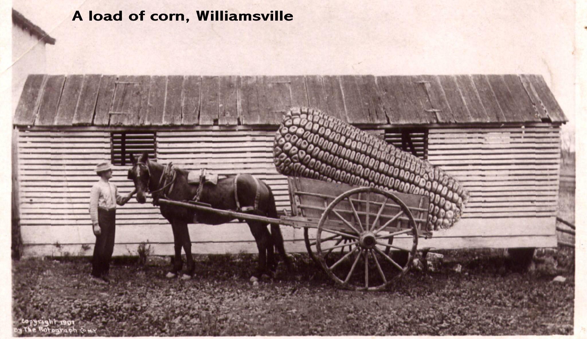 williamsville.jpg