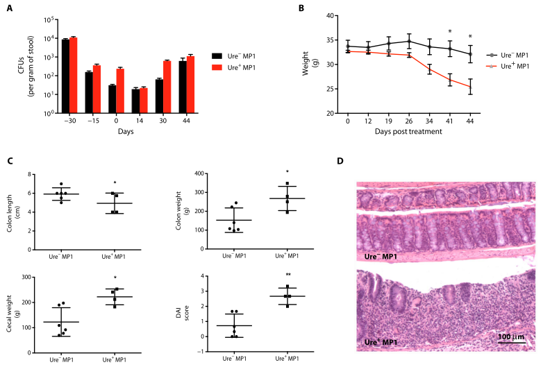 Fig. 6. Effect of E. coli urease on colitis in a T cell adoptive transfer mouse model of colitis