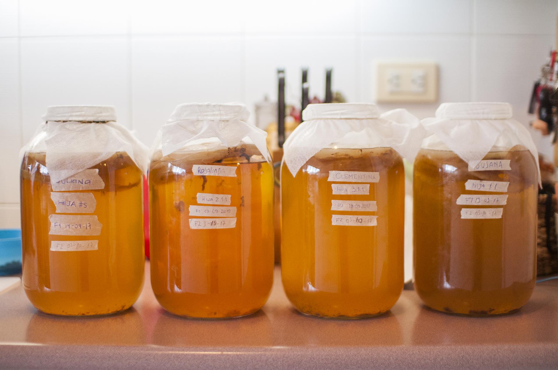 Kombuchas preparándose para una nueva fermentación