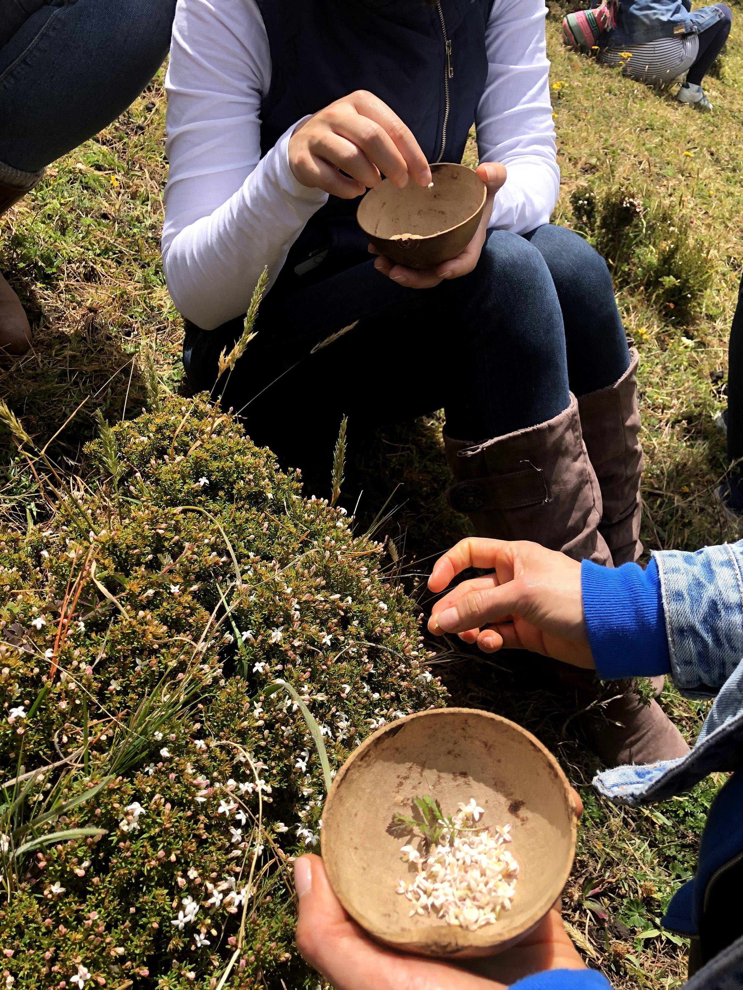 Recolección de manzanitas, una golosina de los niños de la comunidad