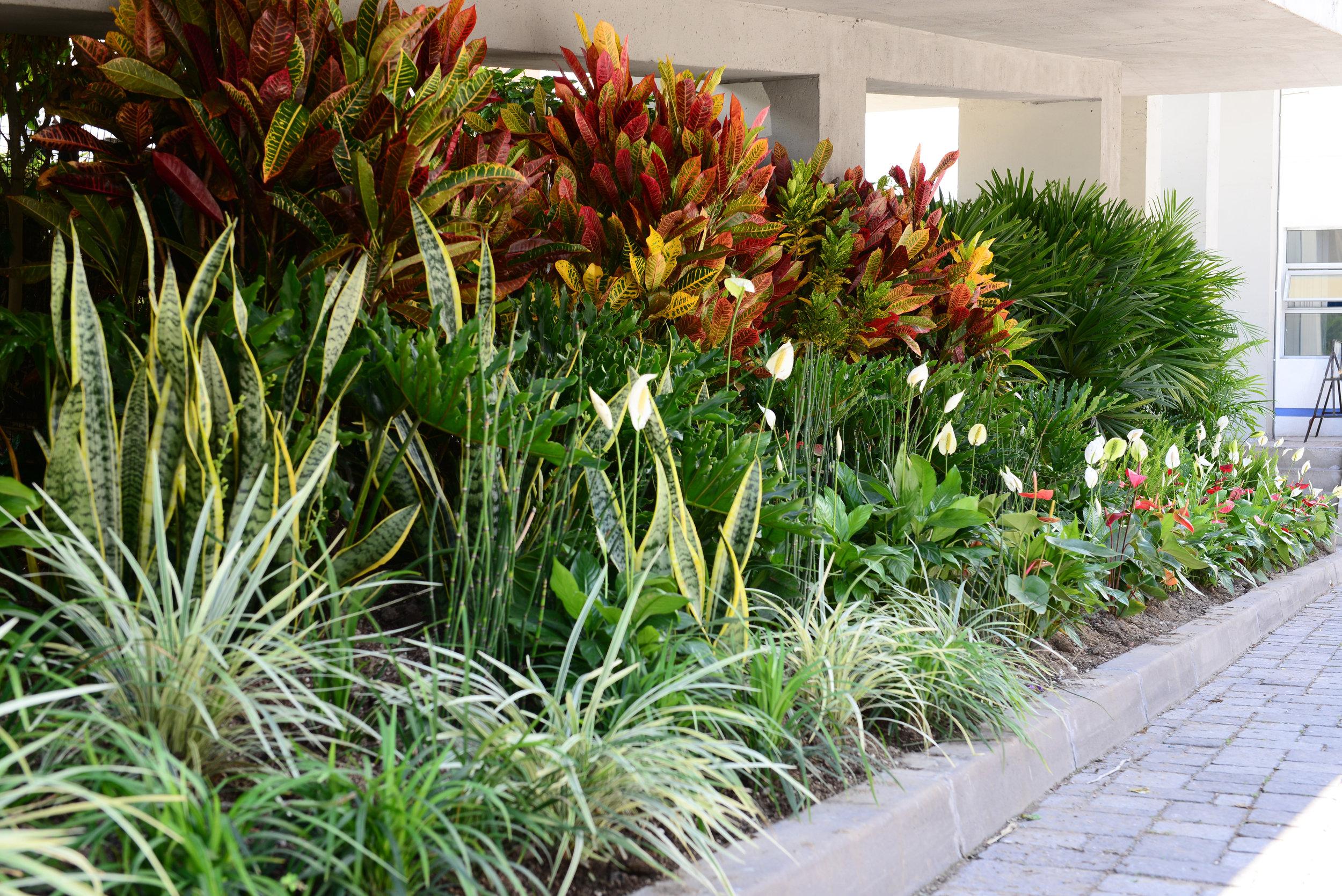 Nuestras casas como parches ecológicos urbanos. Fotografía: Renaturalizar