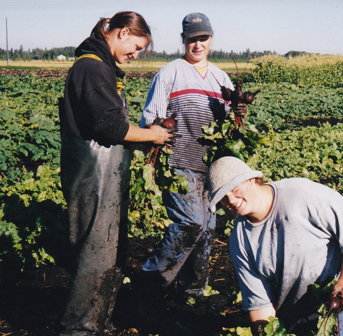 Jenny (far left) harvesting beets on the Vriend's farm; working there for five seasons was great inspiration for starting up Sundog.