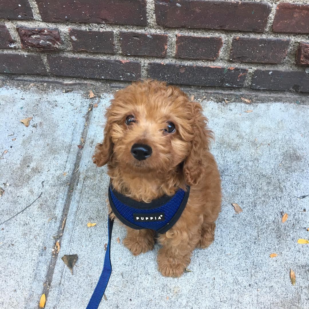 fcap-puppy-program.jpg