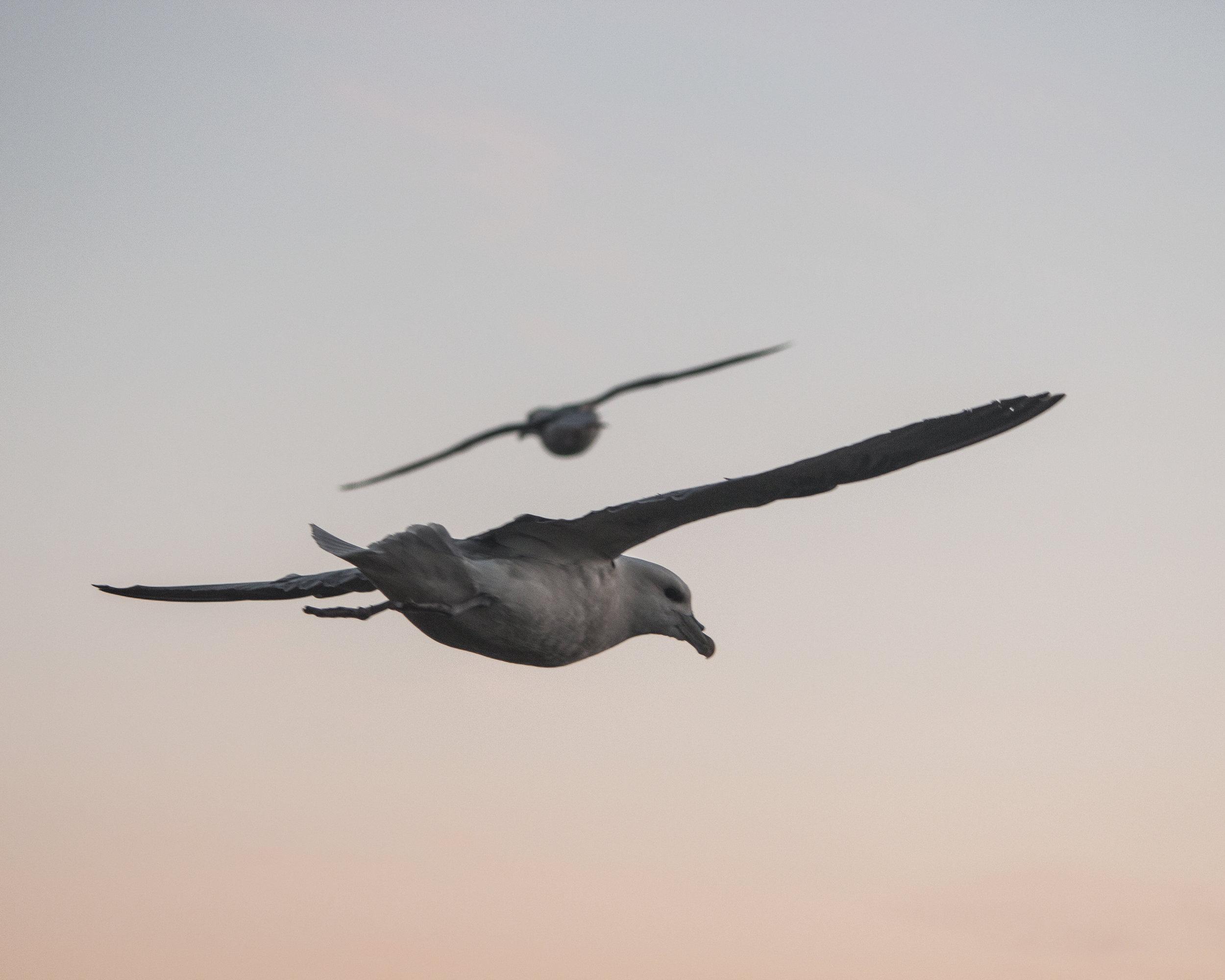 flybirdy.jpg
