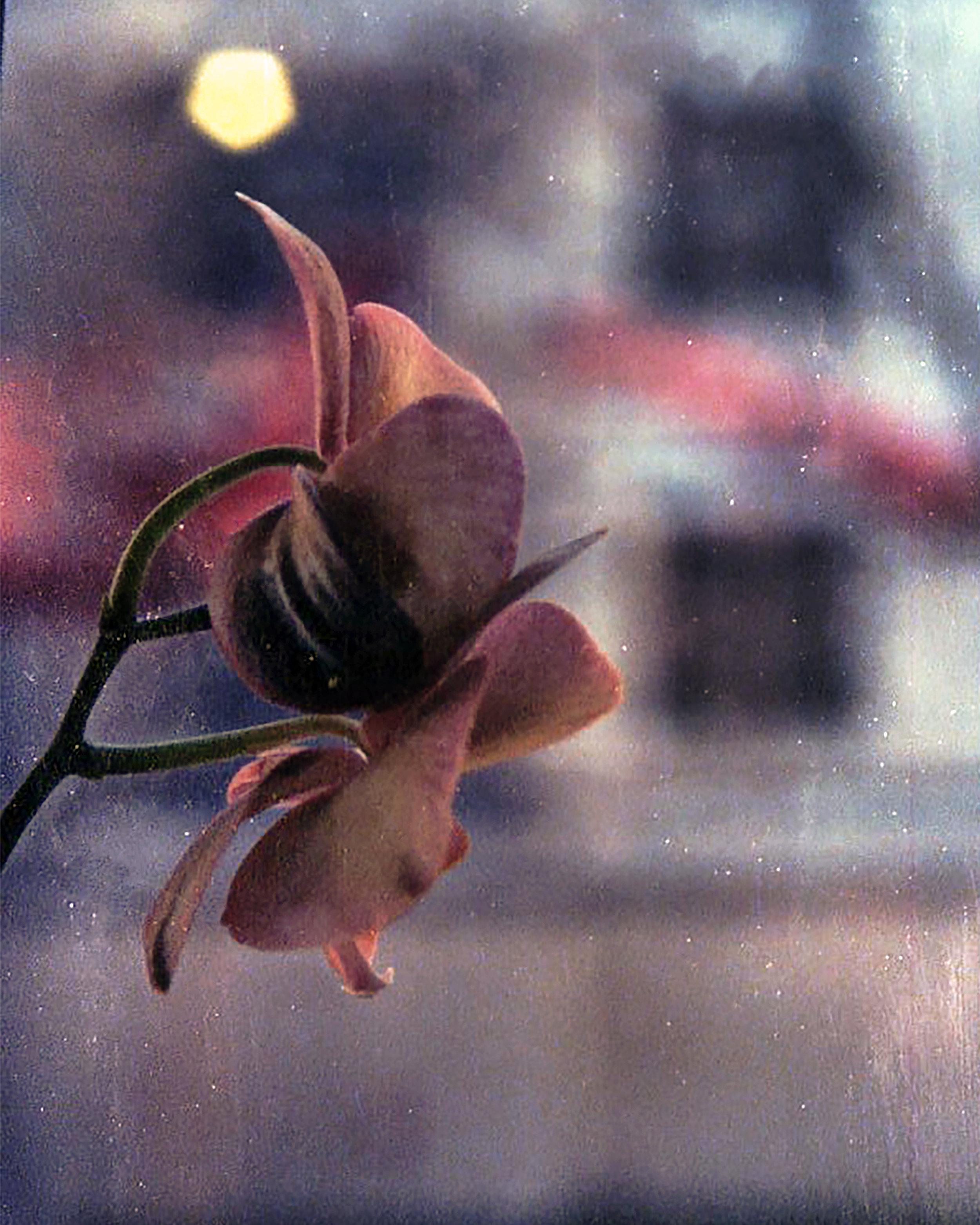 flower on film.jpg