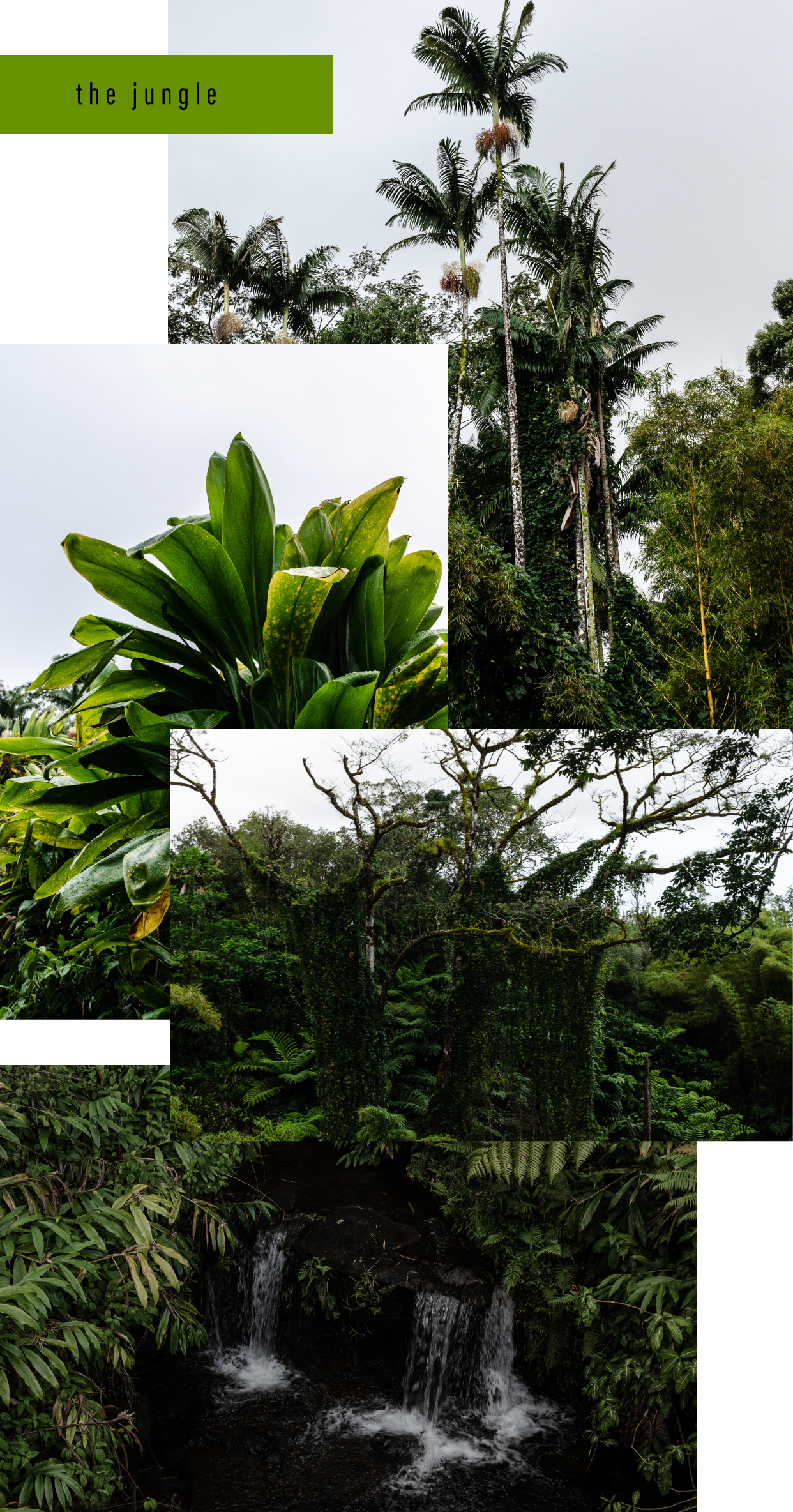 Bottega-x-Hawaii-The-Jungle.png