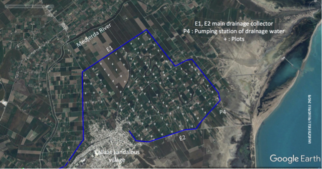Experimental field (Tunisia)