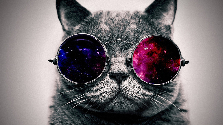 Mike Goddard Cat