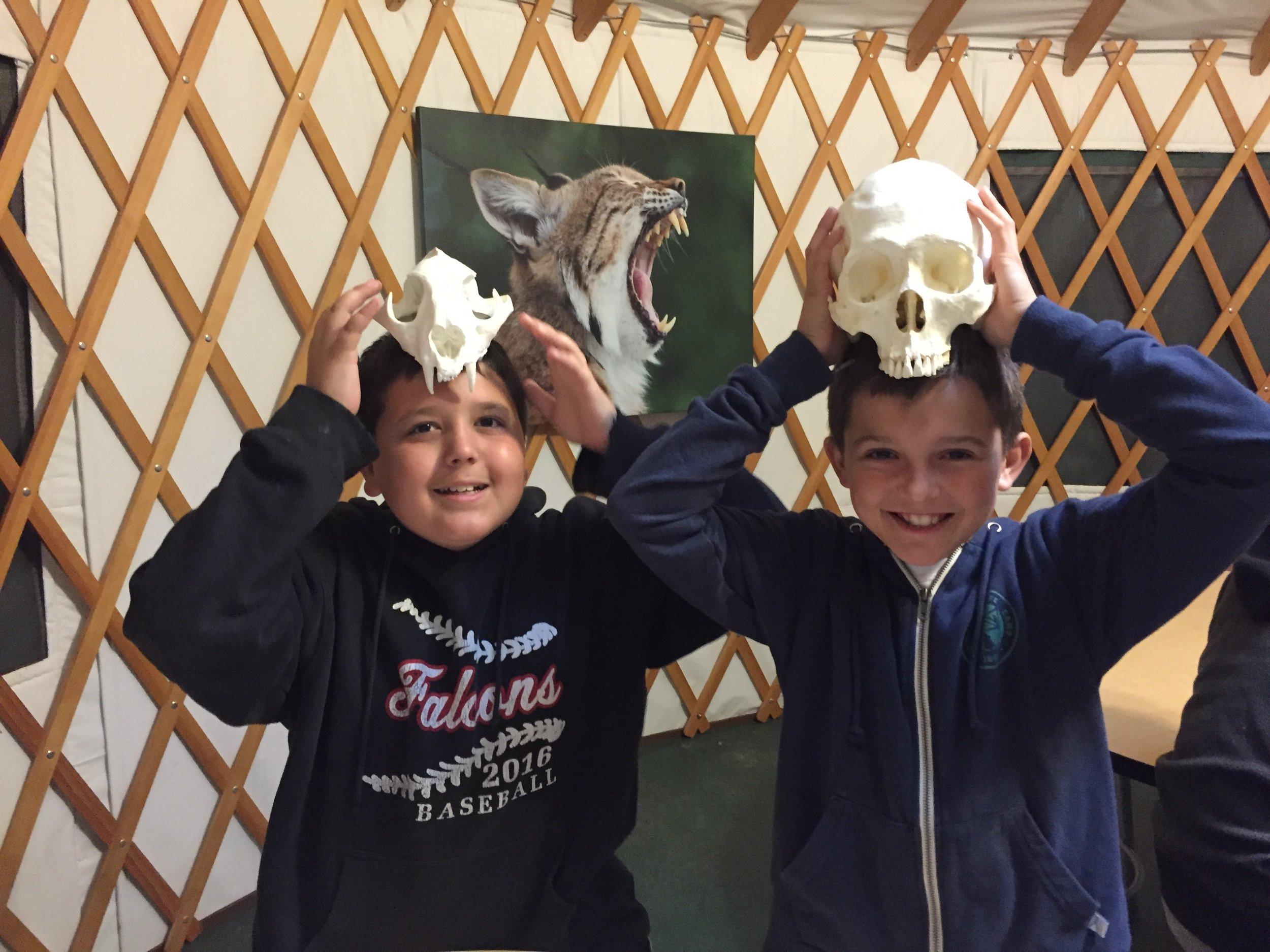WW Skulls - 2 Students Comparing