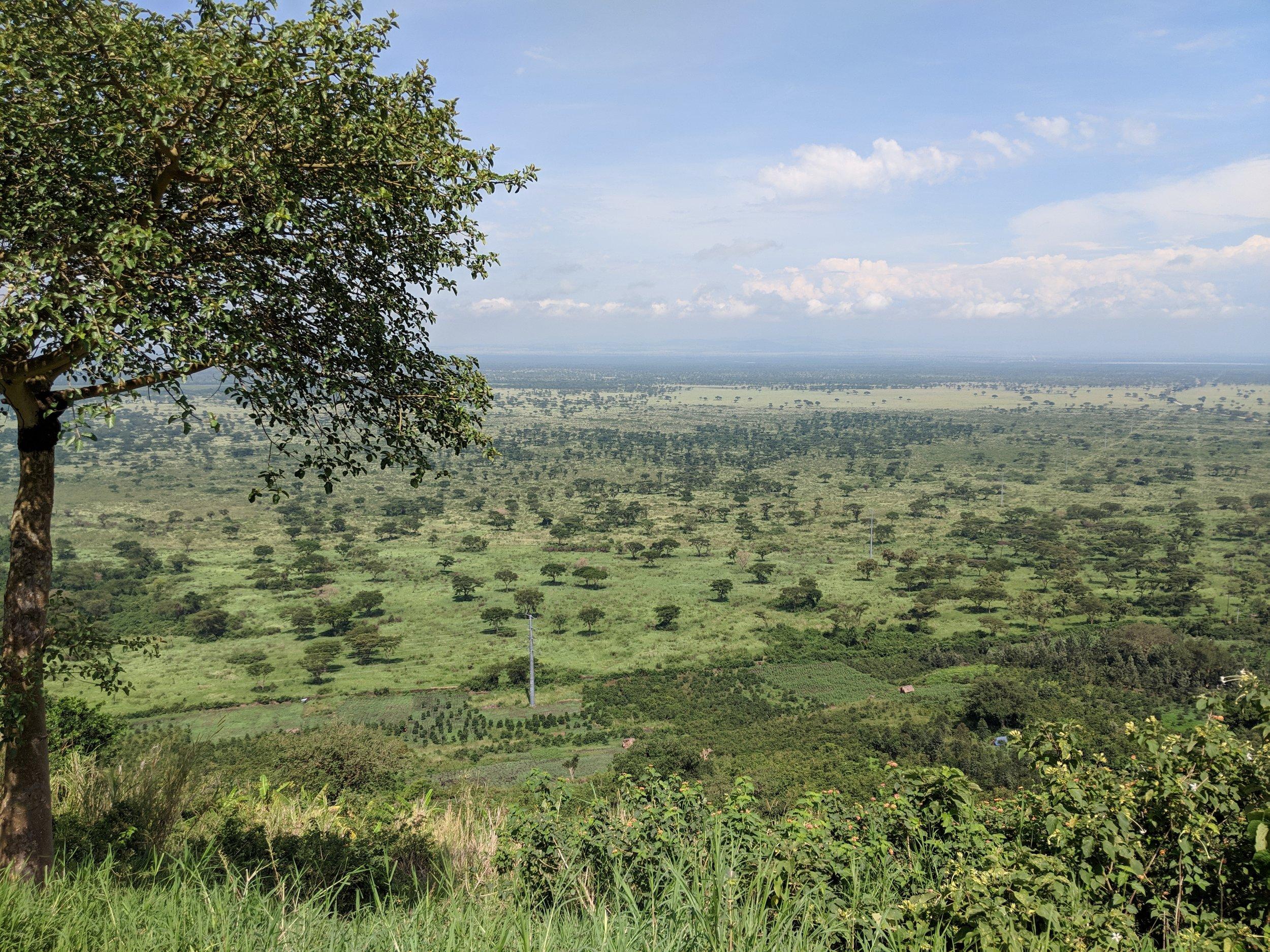 A savanna landscape in Uganda. Photographer: Erman Misirlisoy