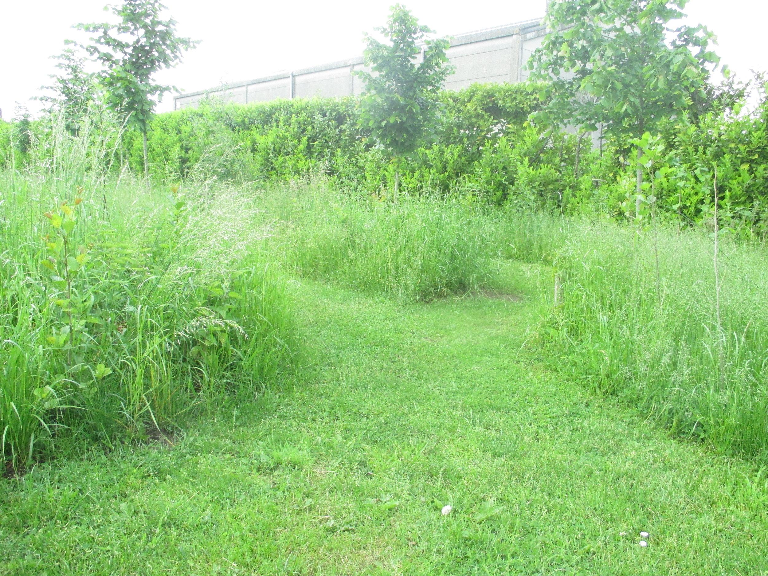 graspaden Fierens.JPG