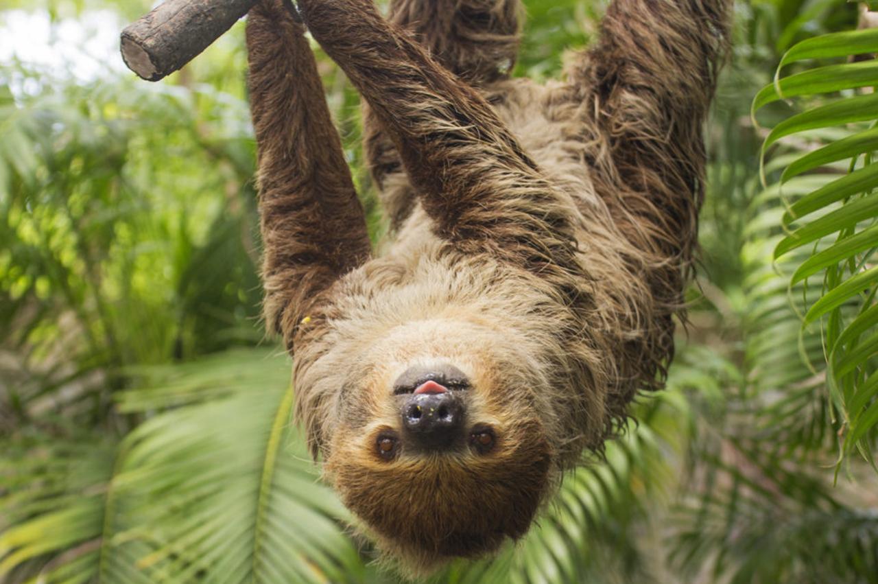 slothcos.jpg