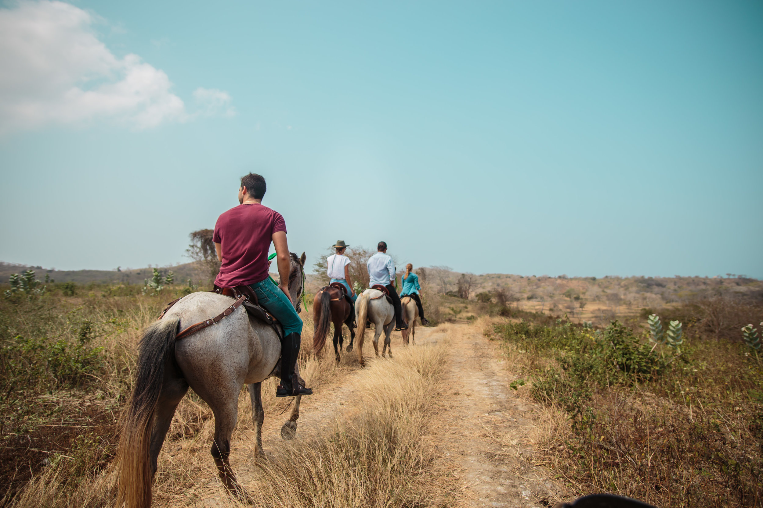 Activities_Horse Riding_Island Panorama Single File.jpg
