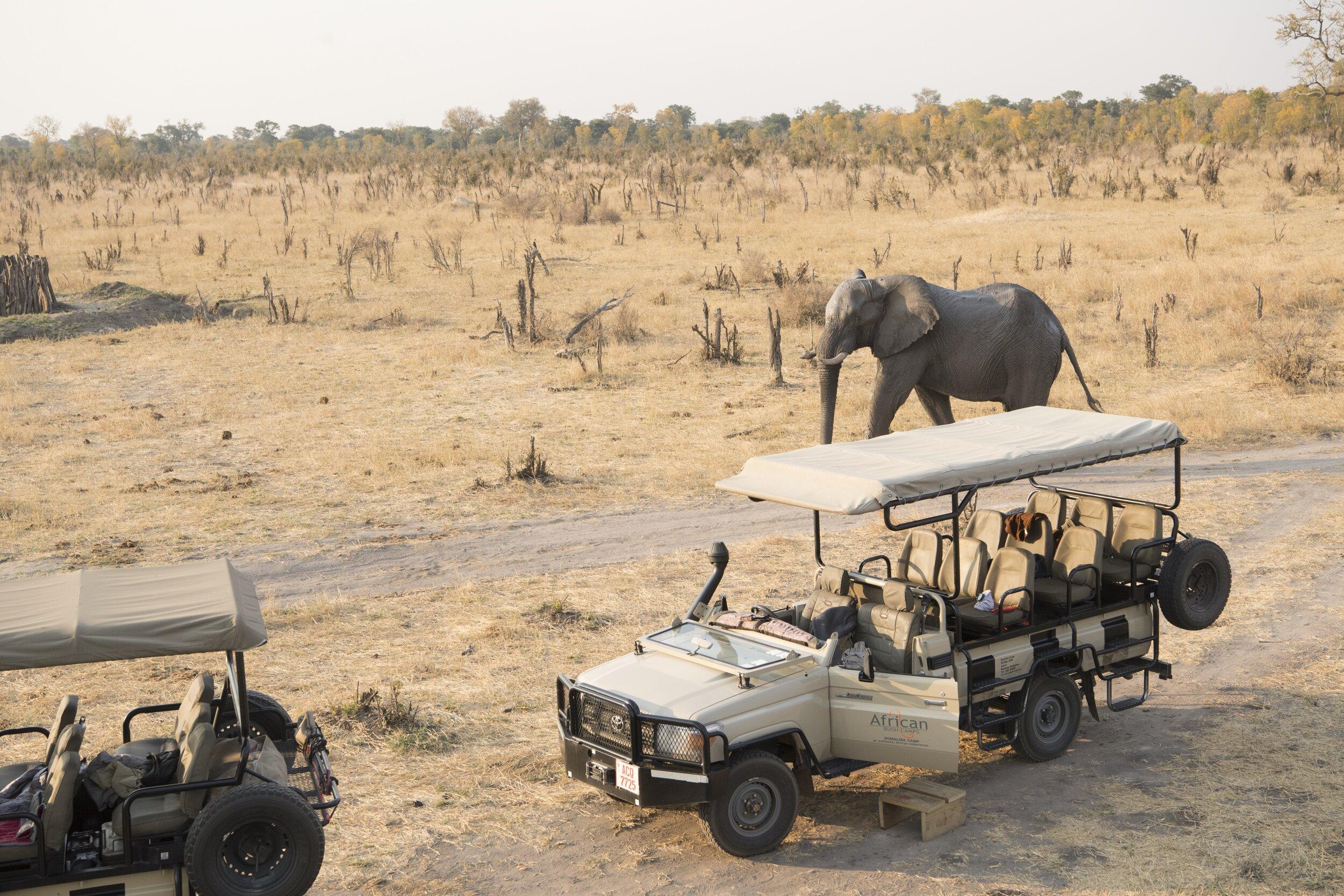 somalisa_camp_hwange_national_park_zimbabwe_elephant___5sw0028_181.jpg