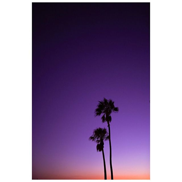 West-coast palm sighting 🌴💜🌴💜🌴💜⠀ ⠀ 📸@josephmatthew2.0 💑@josephbarberphotography⠀ ⠀ Shooting with Sony a7iii 14mm / 35mm⠀ ⠀ ⠀ ⠀ ⠀ ⠀ ⠀ ⠀ ⠀ ⠀ ⠀ ⠀ ⠀ ⠀ ⠀ _____________________________ #landscape_love #landscape_capture #landscapescapture #landscapephotography #landscape_hunter #landscapephotographymagazine #colorspecialist #ig_colors #colorpalette #colorphotography #travelphotographer #cameralove #sony_shots #sonymobile #sonylandscape #sonycamera #sonymirrorless ⠀⠀⠀⠀⠀⠀⠀⠀⠀ #sunsetsuperstar #sunset #whatasunset #sunset_vision #world_bestsky #pocket_waters #ig_skylovers #love_all_sky #loves_all_sky #sunset_today #skysunset_shotz #super_photosunsets #ig_sunset @sunset_stream @viewmysunset @unlimitedsunset @sunsetstream_westside @sunset_vision @world_bestsky @pocket_waters_ @ig_skylovers @love_all_sky @sunset_today @skysunset_shotz @super_photosunsets ⠀⠀⠀⠀⠀⠀⠀⠀⠀ ⠀⠀⠀⠀⠀⠀⠀⠀⠀ @sonyalpha @sonyalphapix @sonyimages @sonya7iii @sonyalphasclub @sonyalphagallery @sonyusers @sonyalphapro @sonyalphaweddings @sonyalphaphotos @sonyprousa @sonya7lovers @sony_a7riii_users  @JosephBarberPhotography  @JosephMatthew2.0 @JosephBarberPhotography