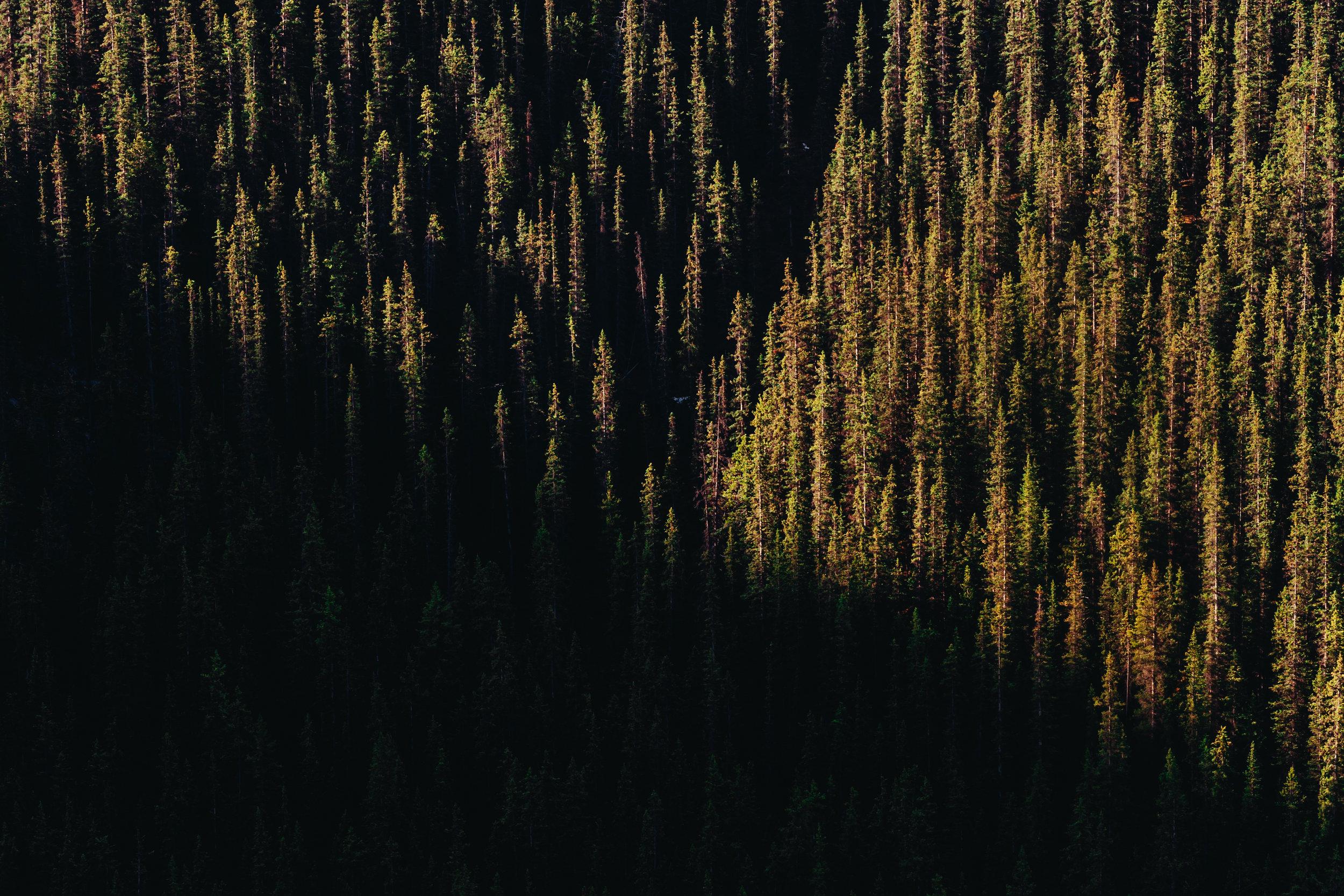 10_Banff-alberta-trip_Joseph-Barber-Studios_00765.jpg