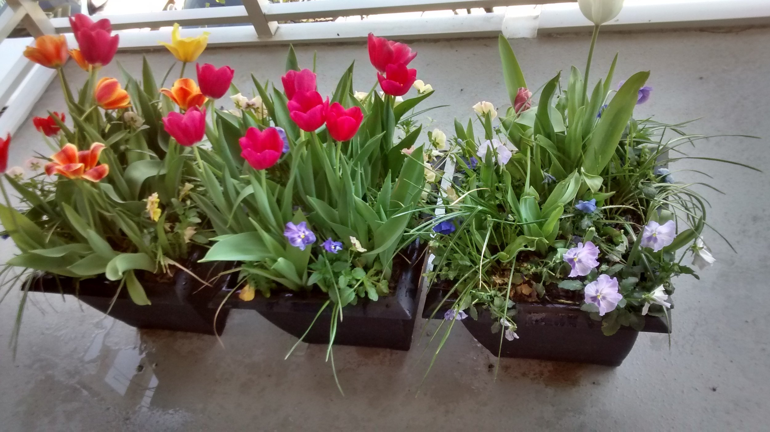Small terrace garden for year round flowers.