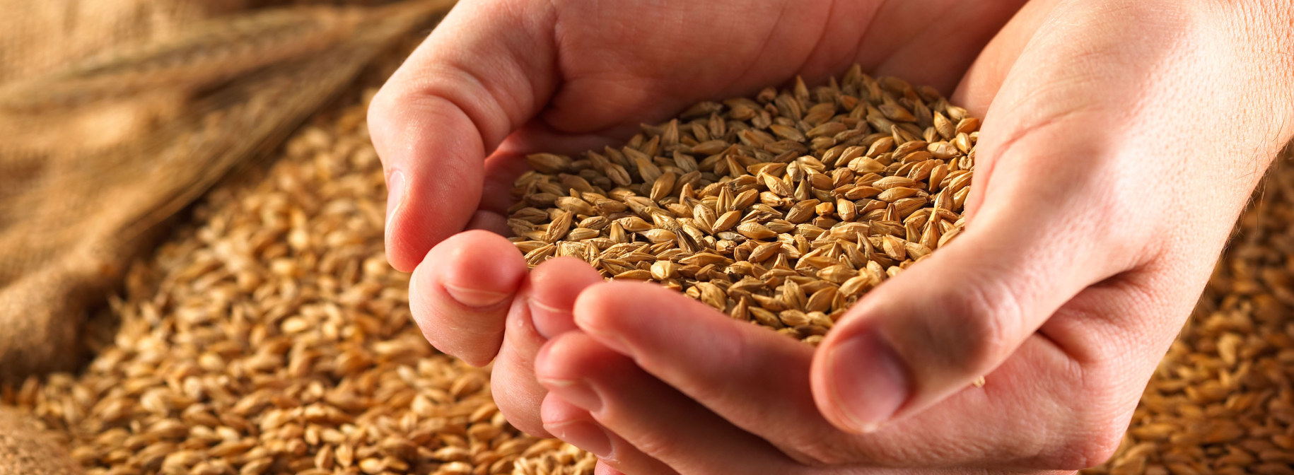Whole Grains    Are you eating enough whole grains? Learn how to make these hearty options a part of your daily diet.