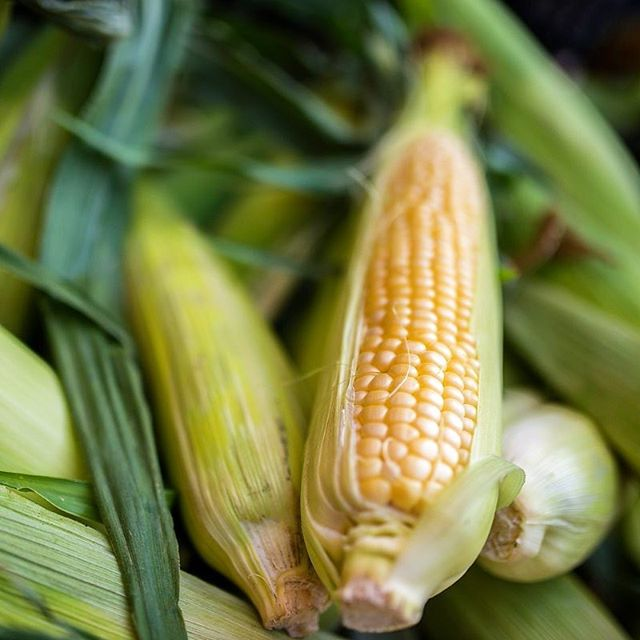 We have Alberta grown corn coming into the market! Although not from Taber, our vendor from Medicine Hat will be bringing fresh and delicious corn 🌽 for you to enjoy! Come check out Sherwood Park's vibrant market with a huge selection of vendors and products. Open Wednesday 4-8 in Home Depot #sherwoodpark parking lot! . . . . . . #sherwoodpark #shpk #shpkfood #shpkfitness #shpkmoms #fortsask #ardrossan #yeg #yegfood #eatlocalyeg #albertagrowers #albertagrown #yegfarmersmarket