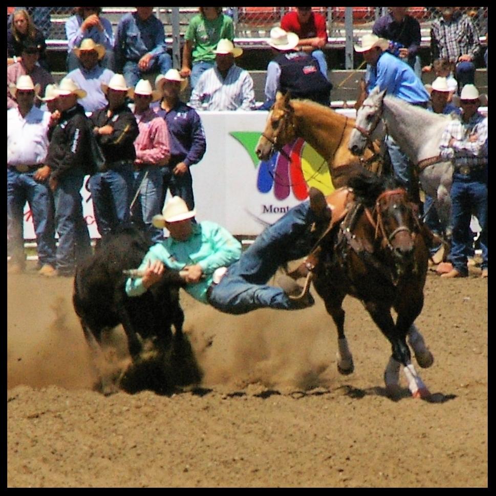 Rodeos -