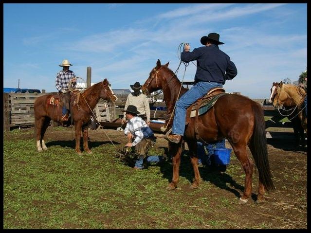 Ranch Branding -