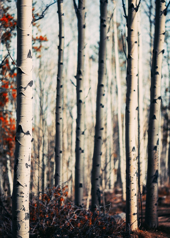 Timberline Portfolio-59.jpg