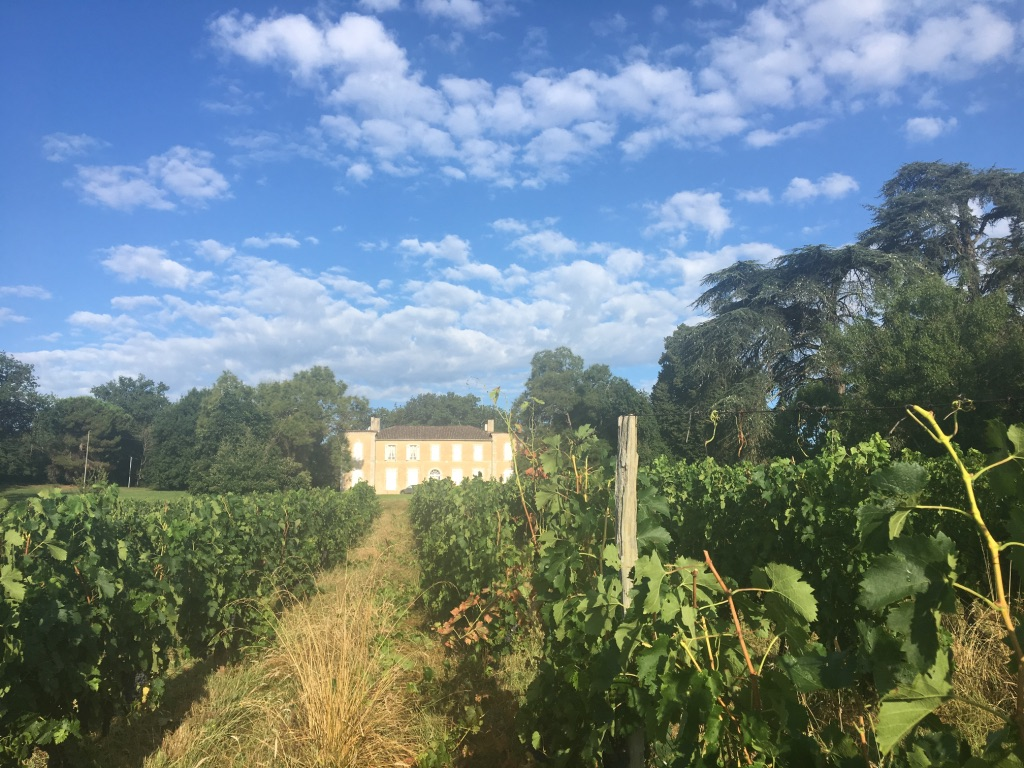 Pichon vineyard in St. Leon, France, where I worked