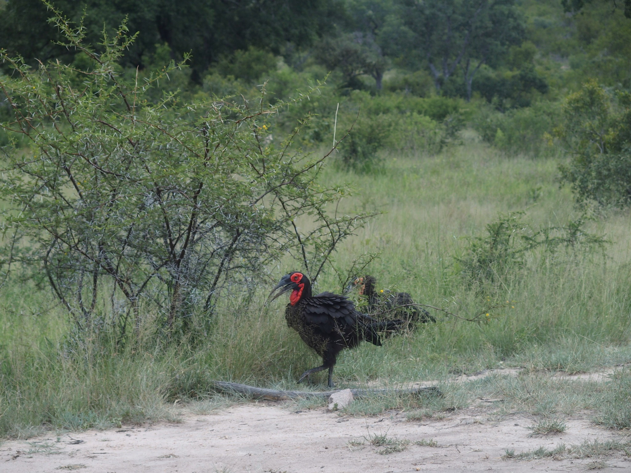 We saw several birds with colorful heads and necks, like this one.