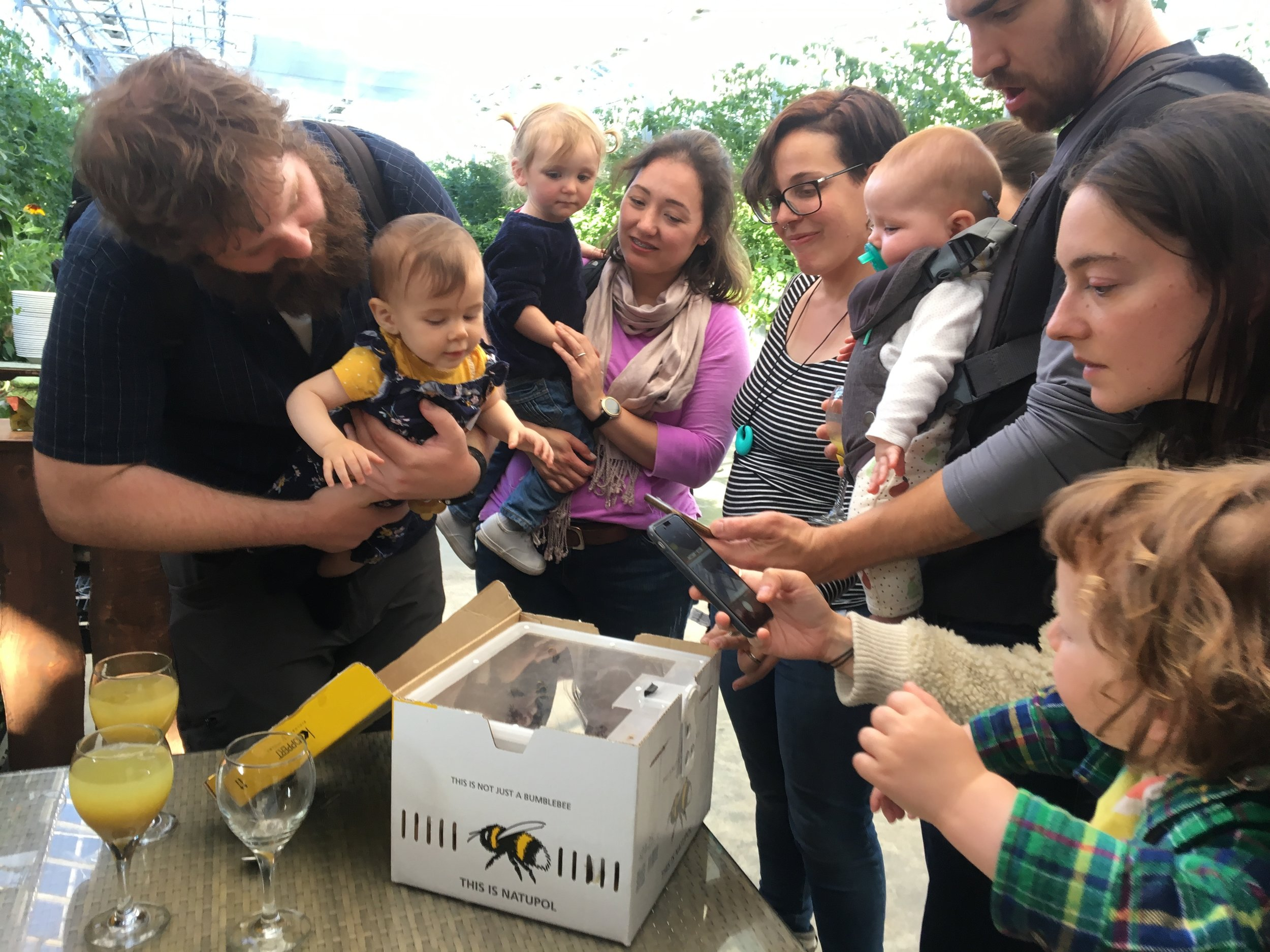 A fun sight for the kids at the wedding — a box of bees!