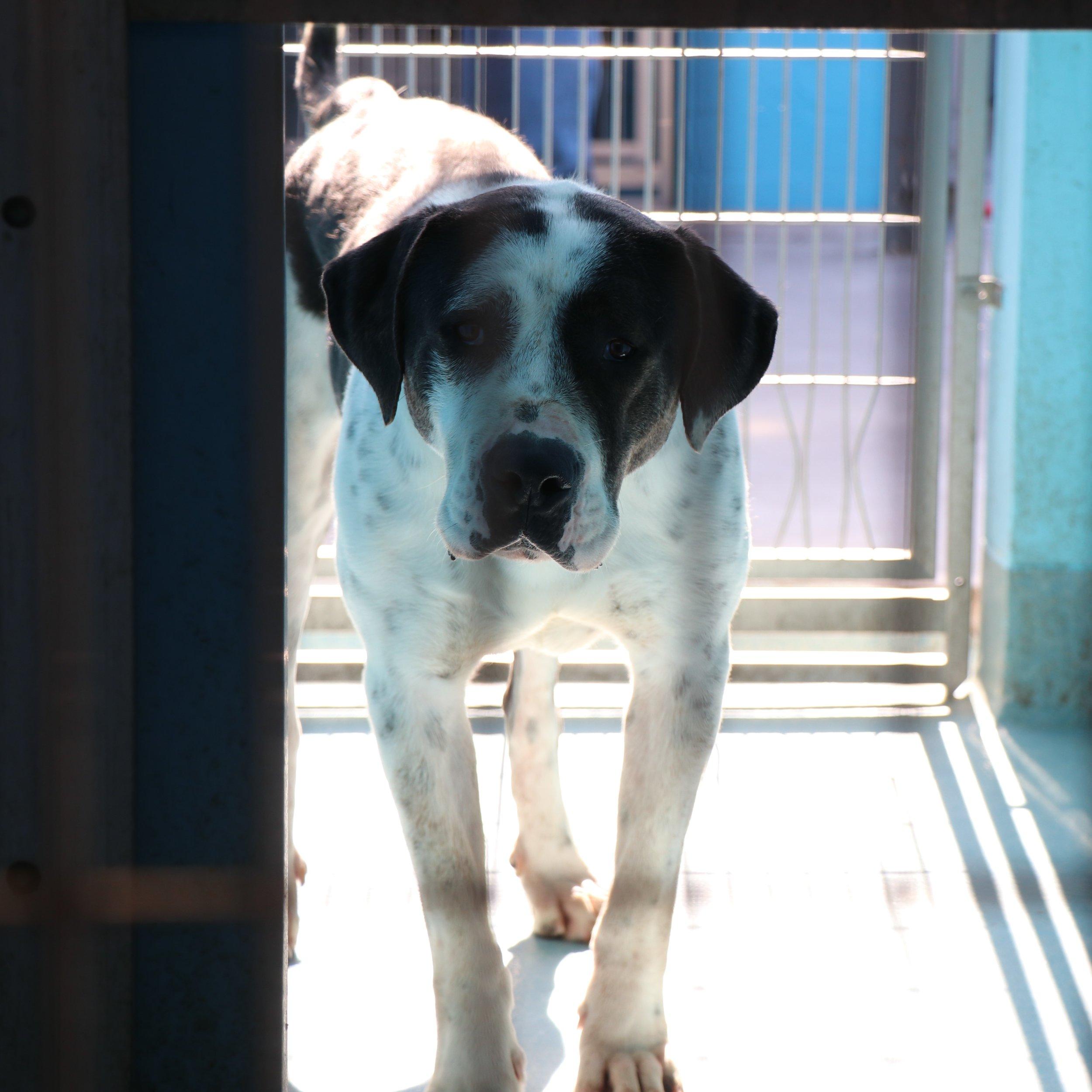 Whitey at Baldwin Park Animal Shelter
