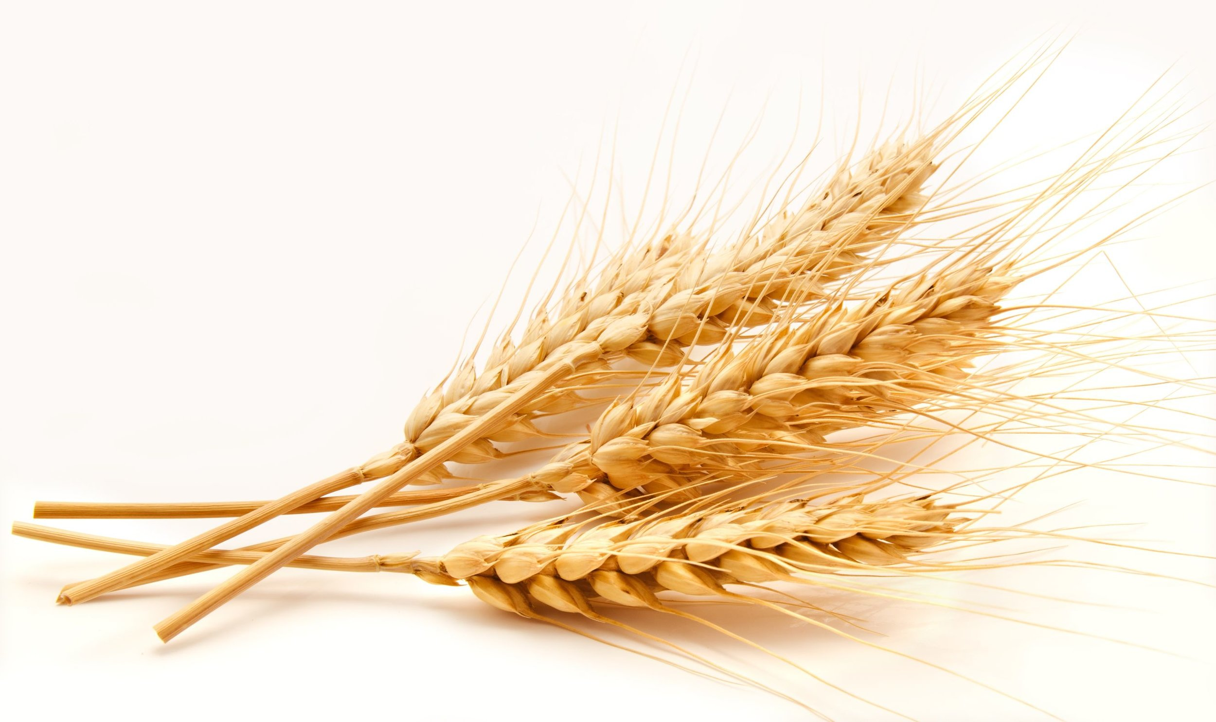 Gluten is found in wheat barley and rye Easy Gluten-Free Cooking Easy Delicious Gluten-Free Skillet Meals