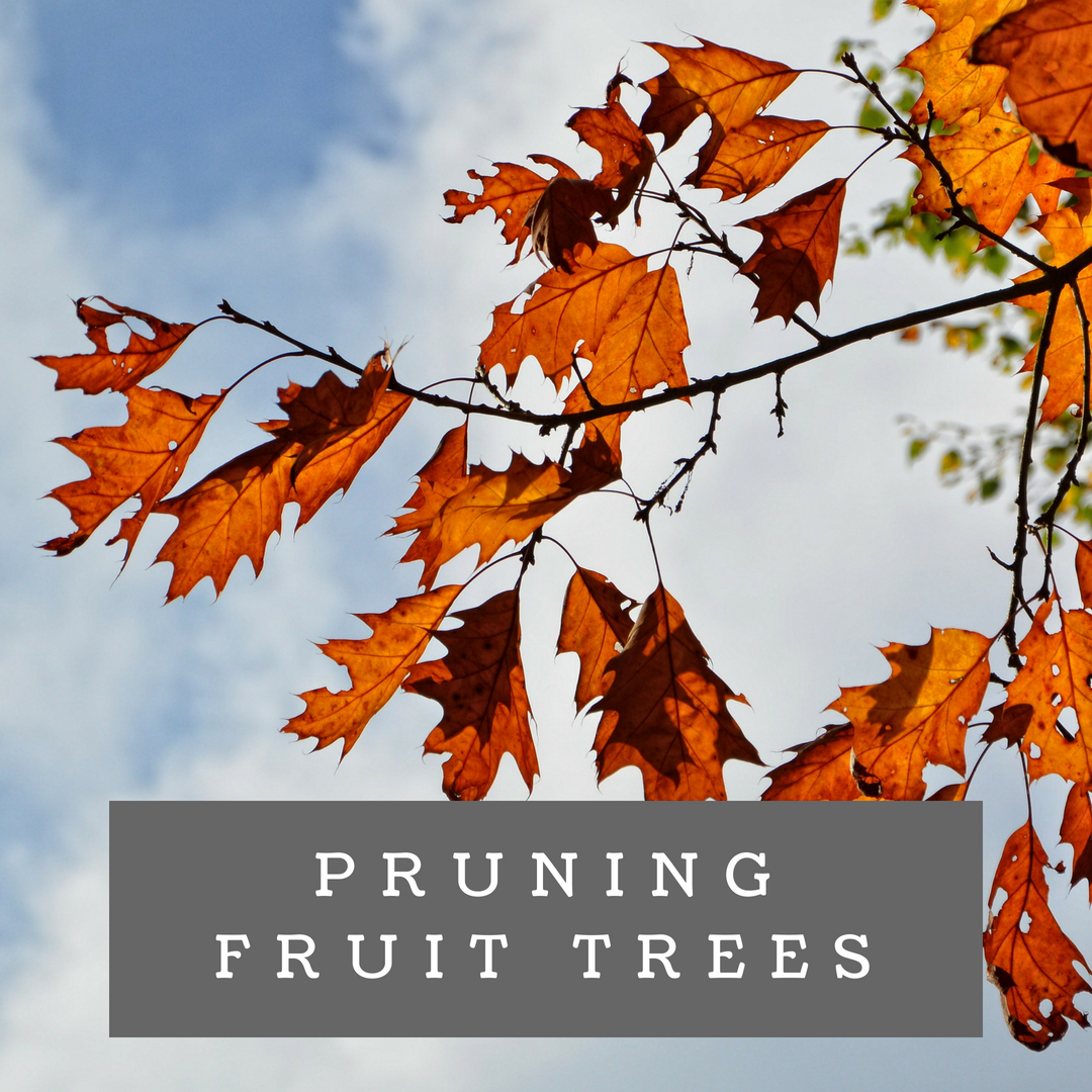 Pruning Fruit Trees (1).jpg