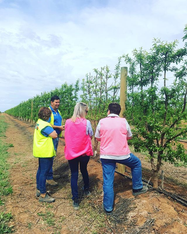 Today we took some of our office ladies on a farm tour! Educating our lovely ladies and giving them an insight into Agronomy life is an important part of our business. At SHC we endeavour to make sure everyone understands the depth across our entire business. #agronomgy #aussieag #mallee #orchard #staff #training #corporate #farming