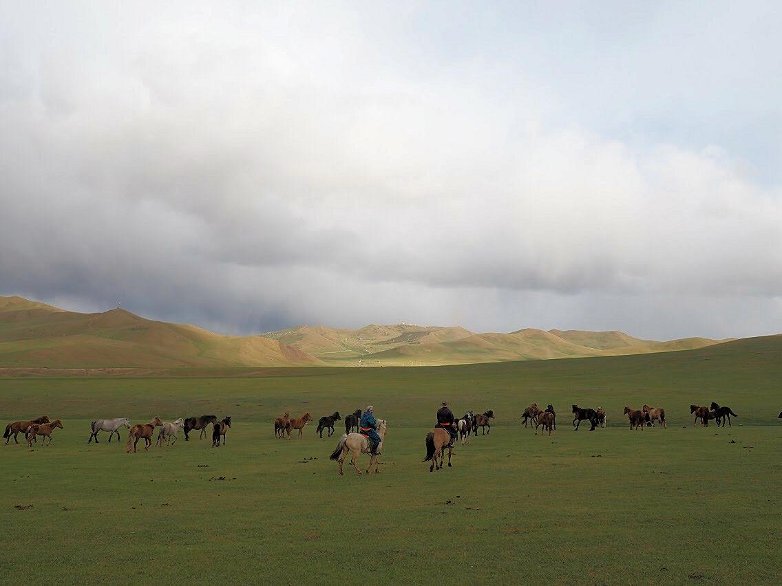 So many wild horses