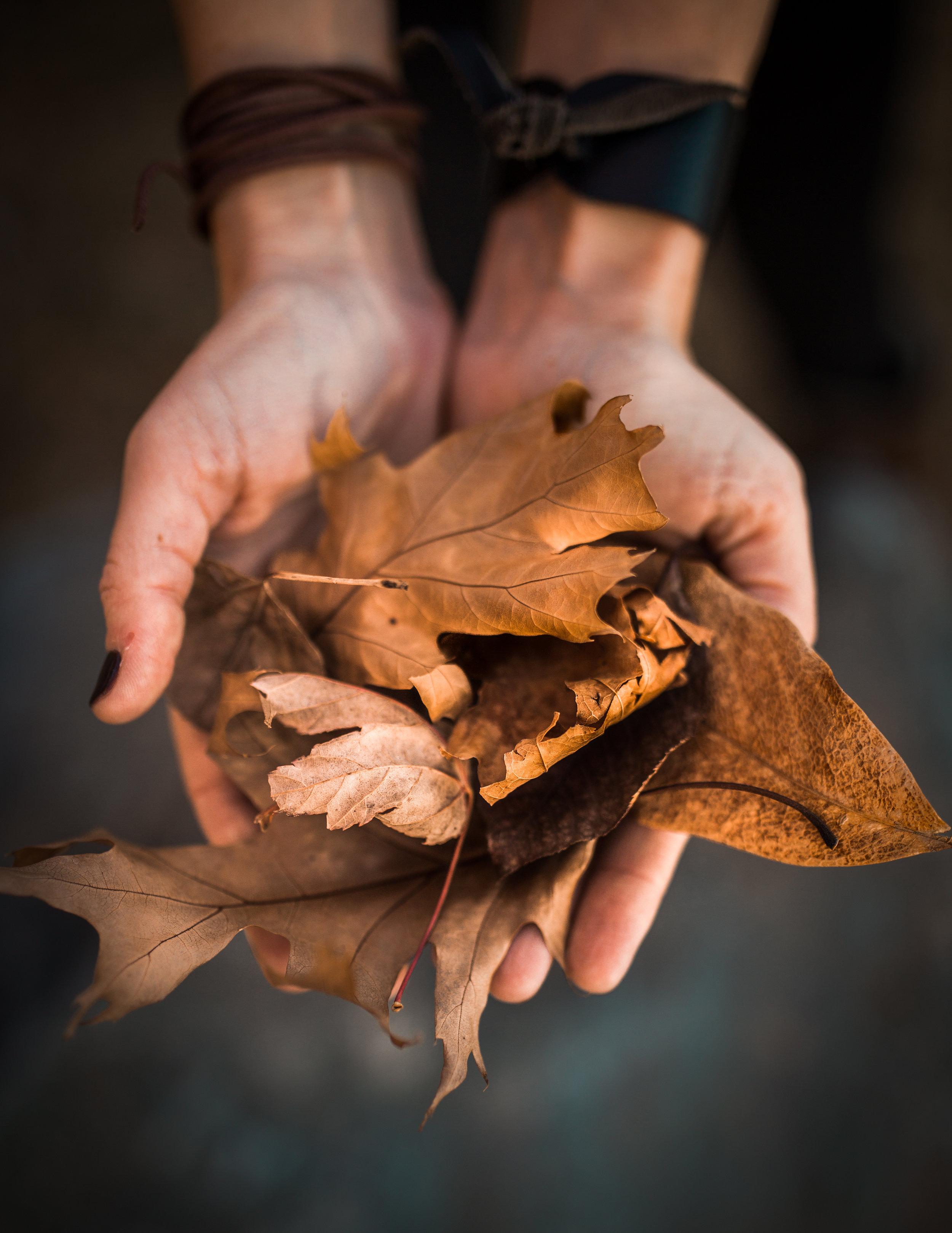 leafhand.jpg