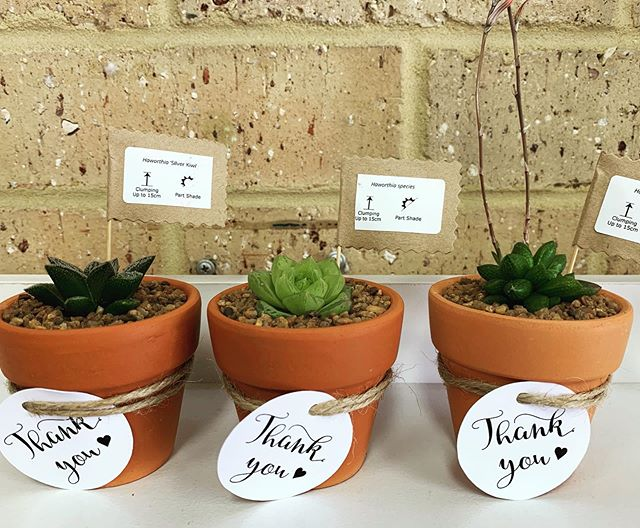 Low light succulents in stock 💚#lowlightsucculents #succulentgifts #succulentlove