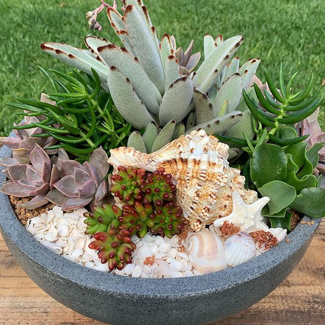 Today I am dreaming  about sun, bathers and beach it is coming Perth #perthbeachlife #perthbeachlove #perthlife #succulentpots  #waterwise #waterwiseplantsperth @gardenconnect