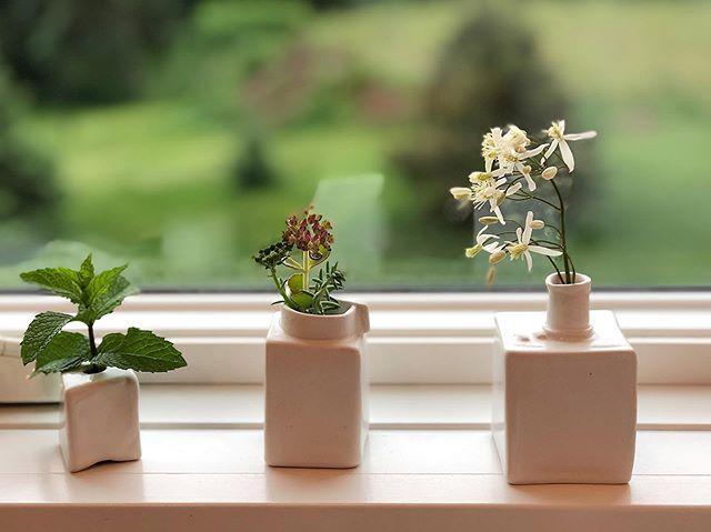 Windowsill offerings. #mint #sedum #clematis #kitchensink #adubestay #vacationrental #stockholmwisconsin #interiordecor #staging