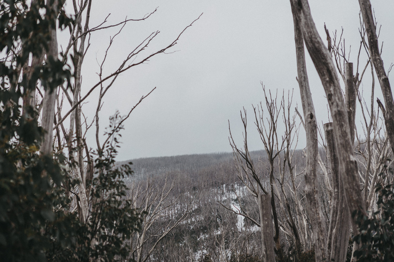 Winter_Elopement_Amie_Nick_Anna_Taylor_172-766A1743.jpg