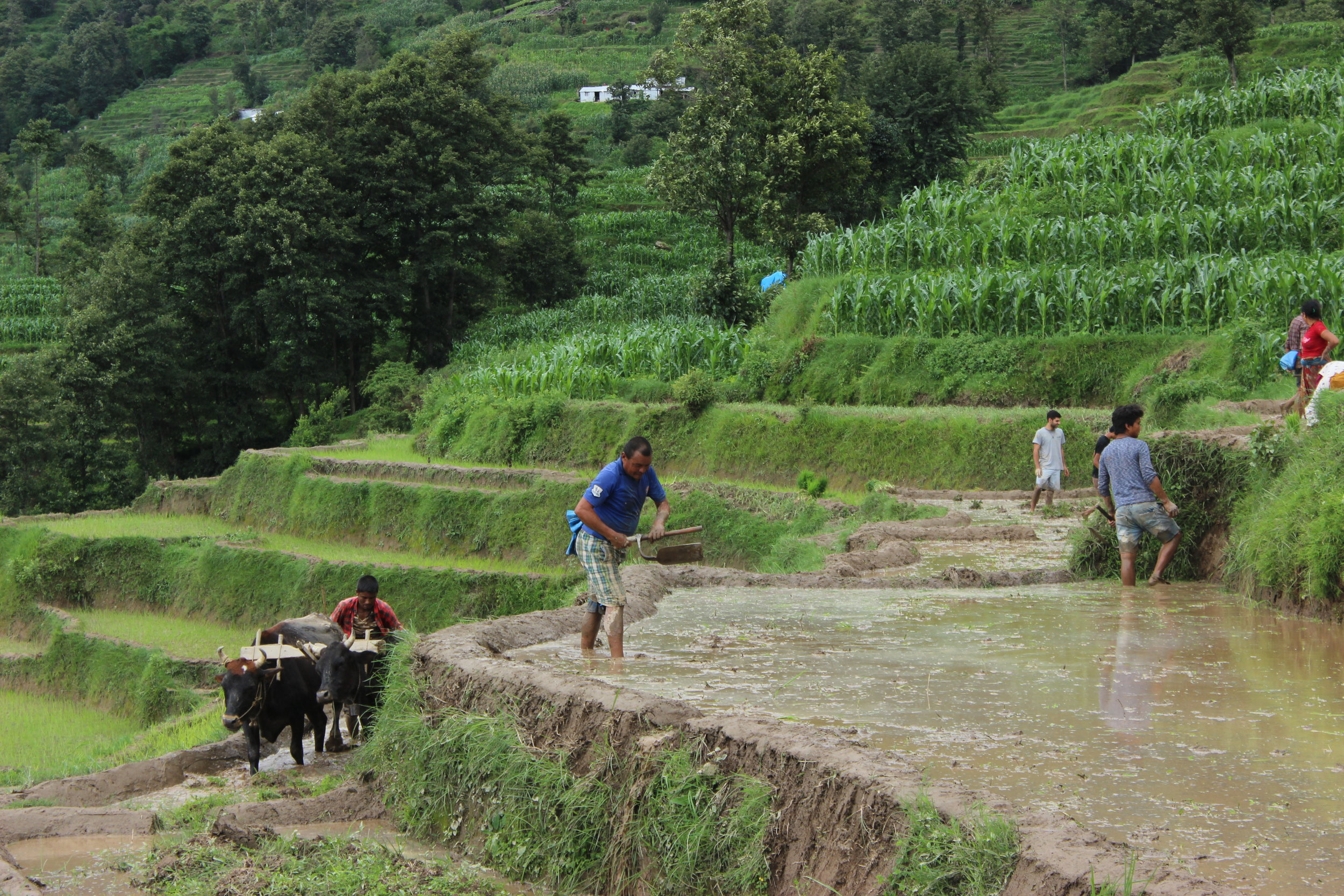 Working in Farms to Develop Agriculture
