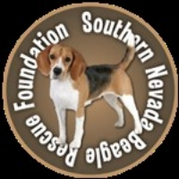THIS IS A GREAT LAS VEGAS RESCUE FOR BEAGLES & LITTLE PUPS