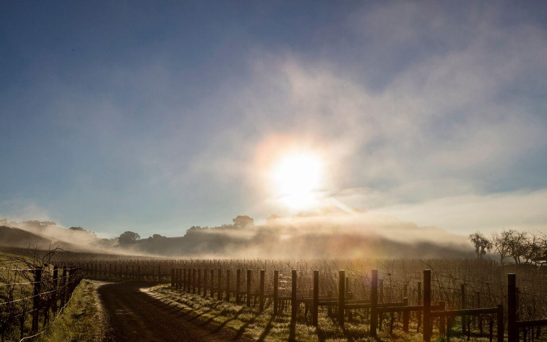 Landscape + Vineyard 1