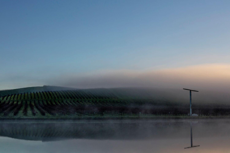 Landscape + Vineyard 5