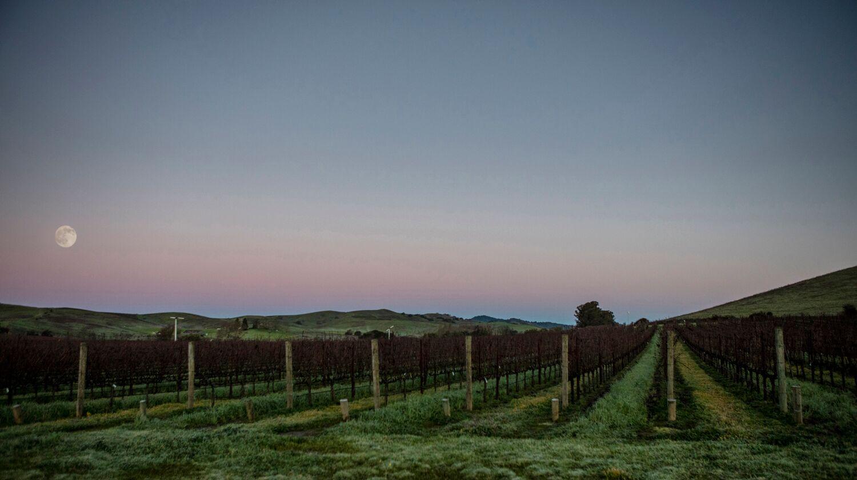 Landscape + Vineyard 9