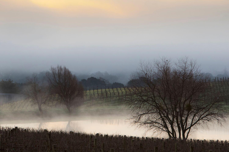 Landscape + Vineyard 11