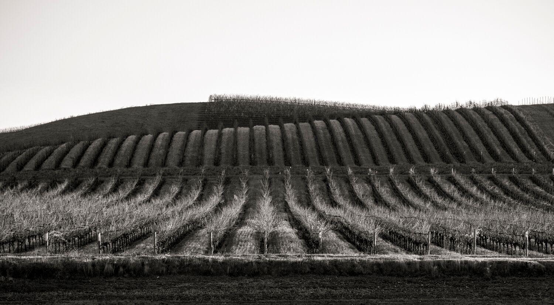 Landscape + Vineyard 13