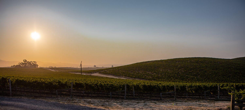 Landscape + Vineyard 15