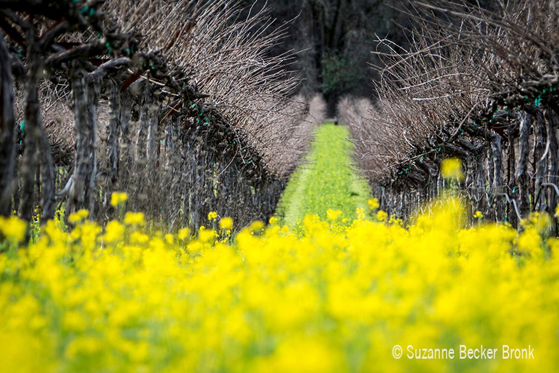 Landscape + Vineyard 17